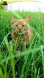 Gato de ojos verdes Foto de archivo libre de regalías