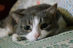 Gato de ojos verdes Fotos de archivo