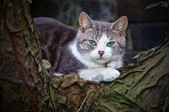 Gato de ojos verdes en árbol Imágenes de archivo libres de regalías