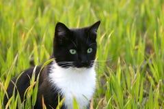 Gato de olhos brilhantes Imagens de Stock
