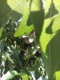 Gato de Olly Foto de archivo libre de regalías