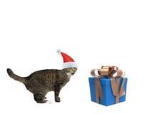 Gato de Papá Noel cerca del regalo del Año Nuevo Imagen de archivo