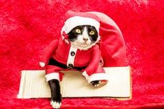 Gato de Papá Noel en la caja con el bolso rojo del regalo grande en fondo rojo Foto de archivo