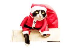 Gato de Papá Noel en la caja con el bolso rojo del regalo grande en un fondo blanco Imagen de archivo
