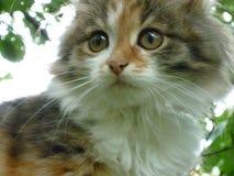 Gato de Pusy Imagen de archivo libre de regalías