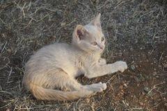 Gato de reclinación Imagen de archivo