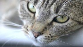 Gato de reclinación almacen de metraje de vídeo