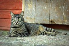Gato de reclinación Imagenes de archivo