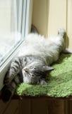 Gato de reclinación divertido en el balcón en día de verano caliente soleado, gato soñoliento, gatito joven en la terraza, medio  foto de archivo
