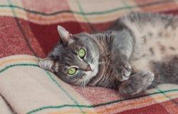Gato de reclinación divertido en el día, gato soñoliento, gato joven en la cama, mitad del gato soñoliento con los ojos abiertos foto de archivo libre de regalías