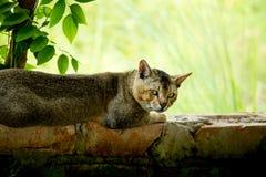 Gato de relajación imagen de archivo libre de regalías