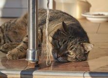 Gato de relaxamento Fotografia de Stock Royalty Free