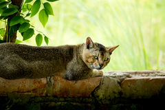 Gato de relaxamento Imagem de Stock Royalty Free