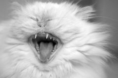 Gato de risa Imagen de archivo