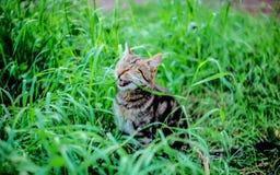 Gato de risa Foto de archivo libre de regalías