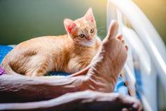Gato de Rown y pierna del sueño de la mujer mayor en cama imagen de archivo libre de regalías