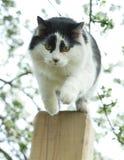 Gato de salto Fotografia de Stock