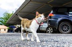 Gato de Satanding Fotografia de Stock