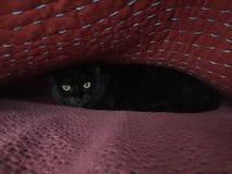 Gato de Scaredy Foto de archivo