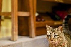 Gato de Stairing Imágenes de archivo libres de regalías