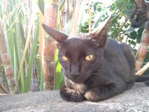 Gato de Sunkissed foto de stock