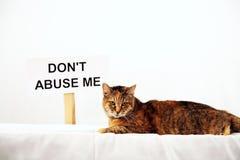 Gato de Tabby Imagem de Stock
