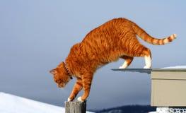 Gato de Tabby amarelo que Prowling imagem de stock