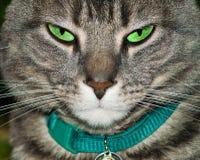 Gato de tabby cansado imagen de archivo