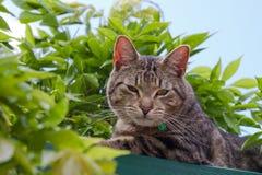 Gato de Tabby en jardín Fotos de archivo libres de regalías