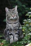 Gato de tabby lindo en jardín Foto de archivo