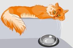 Gato de tabby mullido rojo con los ojos amarillos Fotografía de archivo