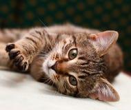 Gato de Tabby que coloca no lado Fotografia de Stock Royalty Free