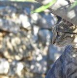 Gato de Tabby que mira la cámara imagen de archivo