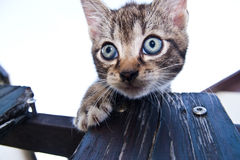 Gato de tabby tímido Imagen de archivo libre de regalías