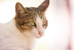 Gato de Tha Imagen de archivo