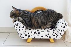 Gato de tigre no treinador dalmatian imagem de stock