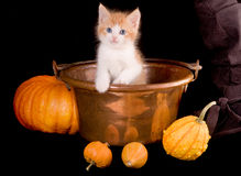 Gato de Víspera de Todos los Santos Imagen de archivo libre de regalías