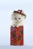 Gato de Wite con los ojos azules Fotografía de archivo libre de regalías