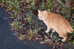 Gato de Yufuin Foto de archivo libre de regalías