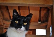 Gato debajo de la tabla Fotos de archivo libres de regalías
