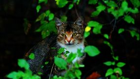 Gato debajo de un arbusto Fotografía de archivo