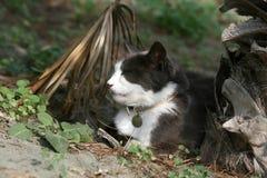 Gato debajo de una palmera fotografía de archivo libre de regalías