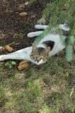 Gato debajo del árbol Fotos de archivo