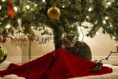 Gato debajo del árbol de navidad fotografía de archivo