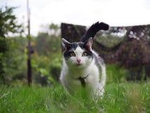 Gato decidido Imagens de Stock Royalty Free