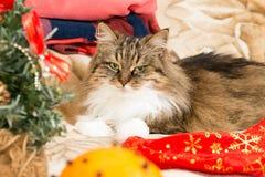 Gato del Año Nuevo con el sombrero rojo de Papá Noel que mira la cámara Imagenes de archivo