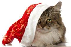 Gato del Año Nuevo con el sombrero rojo de Papá Noel que mira la cámara en un CCB blanco Fotos de archivo libres de regalías