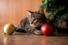 Gato del Año Nuevo con los juguetes Fotos de archivo libres de regalías