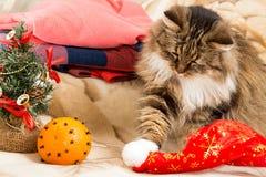 Gato del Año Nuevo que juega con el sombrero del rojo de Papá Noel Imagenes de archivo