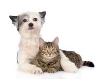 Gato del abarcamiento del perro Aislado en el fondo blanco Fotografía de archivo
